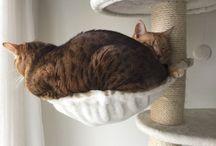 Katten / Katten