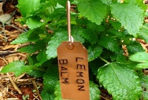 Garden + Garden Accessories / Beautiful gardens and fun things to put in them