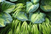 Dobór roślin, czyli co z czym połączyć