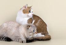 Котики <3