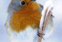 Robins <3