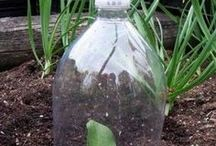 veggie garden tips