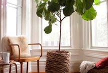 Indoor and Outdoor Gardens / So many great contemporary and traditional ideas!