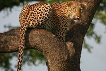 Wildlife Photography / Here are some cool wildlife photographs for you to enjoy. Learn tips and tricks and get off Auto with www.big5photos.com.