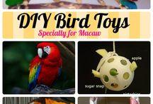 Diy Bird Toys and food
