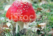 Mushrooms - grzyby