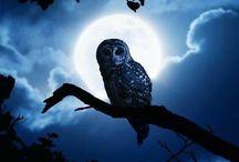 owls hiboux