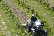 Tilling / Tilling Vineyards 2014