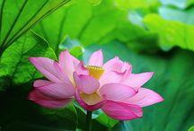 Flores, Plantas...
