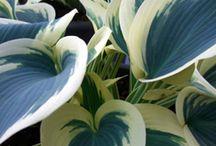 Flora... / by Carol-lynne Olsen