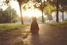 Cat Cat  ! [3] / by mangmoom