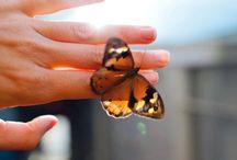 ♥⋰.Butterfly ⋱ ♥