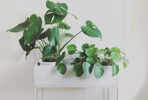 Home - Interior and decoration / Interior and deco inspiration