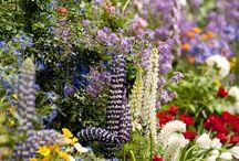 Harika Çiçekler