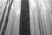 przyroda monochromatycznie / czarno-białe zdjęcia przyrody