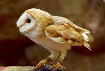 Owls / by Cheyenne Wright Johnson