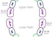 Dental Health Infographics / by Melanie Pugh, DMD, PA