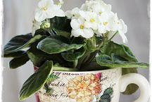 Zahradničení okrasné / Pěstování kytiček a jejich úprava pro radost