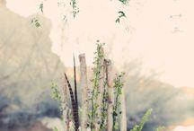 Autumn / flowers