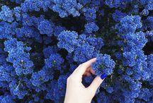 ♡flowers♡