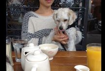 Pets at Le Pain Quotidien / our lovely four-legged guests
