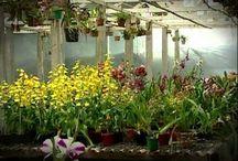 Como criar orquídea
