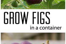 Fruit & Vedgs