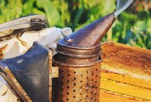 Beekeeping /  Beekeeping information and DIY ideas for being a great Beekeeper!  Beekeeping is the maintenance of honey bee colonies, commonly in hives, by humans.