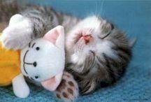 Cute thingsss
