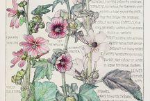 Ботанические принты