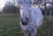 _MlleCarotte / Ma vie avec les chevaux ♥