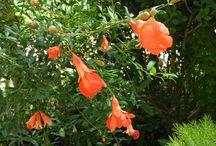 Cia de Arte Floral - Flores do Quintal / Flores do quintal...