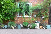 Garden / Moje wczorajsze dokonania