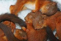 Cute little squirrels