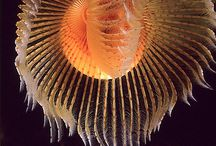 Sea Creatures and Water Life / Life  In Oceans, Seas, Rivers, Lakes, Pond, & Creeks / by Wildfire8470