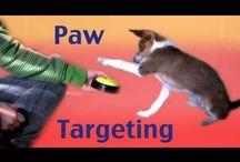 Hundetrænings videoer