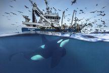 Underwater wildlife photography
