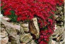 plants for rockwalls