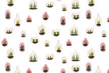 p l a n t e d / this a board dedicated to all of my little cactus in my room (which is a lot) !!