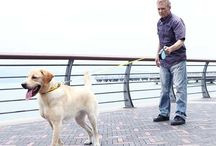 Journey with MIU PET / MIU PET products make a difference in you pet life!