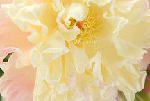 cold porcelain / Цветы из холодного фарфора)) Красота неимоверная)