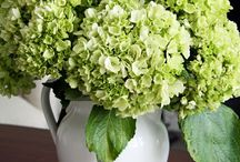 Flowers, Arrangements & Vases / Tips Suggestions and Inspiration for flowers, flower arrangments and unique vases and displays