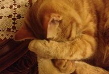 Il mio gatto Tigro