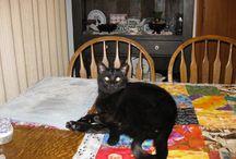 For BJ - Adorable Black Kitties / Black Cats