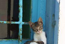 Kat in raam of stoel