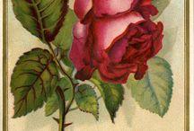 dekoratif boyamalar