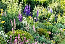 Gardening and Landscapes / by Sharon Lambros