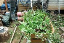 Gardening and Garden Ideas / Organic gardening, permaculture, beautiful gardens and ideas to do with gardening