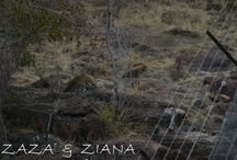 Shayamanzi Leopards / Meet Shayamanzi's leopards and get to know their individual characteristics