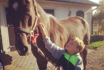 Horses / Stallet